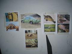 Inspiració per a la Taratuga de Massalfassar