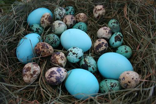 eggs. eggs. more eggs.