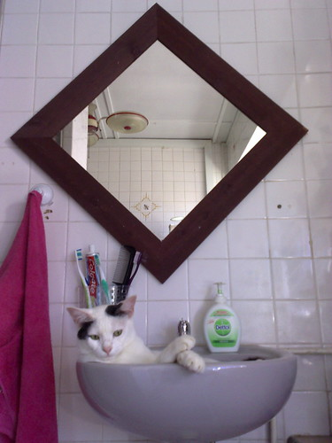 I wanted to brush my teeth but the cat wouldn't budge