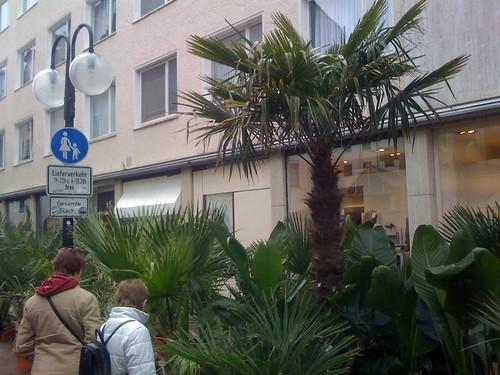 Die Palmenoase auf dem Bielefelder Altstadtfest
