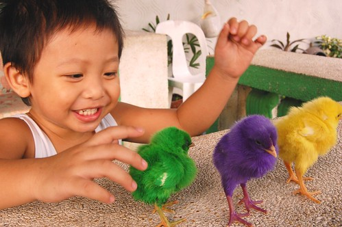 boy technicolor chicks Pinoy Filipino Pilipino Buhay  people pictures photos life Philippinen  菲律宾  菲律賓  필리핀(공화국) Philippines