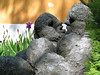 Lovers in a lillybed (miramann) Tags: bronze couple luzern lovers rudolf lucerne lucerna sculptor bronce ruedi bildhauer artistsgarden miramann blättler glistrumentiumani