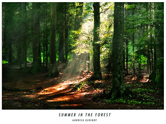 Summer in the forest (andreea_gerendy) Tags: wood trees summer sun sunlight green leaves forest woods path sunny romania transylvania sunbeam sunray carpathianmountains flickrsbest abigfave canoneos400d infinestyle flickrelite andreeagerendy stanalake goldenheartaward