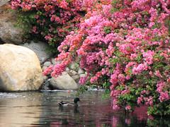 Dreamy (Adventures of KM&G-Morris) Tags: california beauty fun outdoors duck disneyland adventure entertainment springtime fantasyland grandkid anawesomeshot theenchantedcarousel