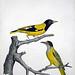 Vintage Bird Illustration, Oriole