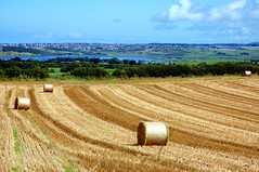 Fields of Gold on the Atlantic Ocean (MarsW) Tags: ocean ireland sea cloud gold harmony northernireland hay bales ems atlanticocean soe castlerock riverbann mywinners diamondheart platinumphoto citrit theunforgettablepictures diamondstars colourartawards platinumphotographer betterthangood fbdg landscapesofvillagesandfields myphotoisasong flickrballoon oletusfotos colourfullaward unforgettablelanadscapes fotofanaticus