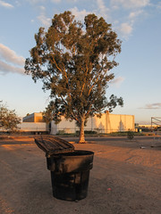 Typical trashcan and typical red gum on a typical evening in Tucson. (Tim Kiser) Tags: 2015 20151004 annapolisdrive arizona arizonalandscape eastirvingtonroad eucalyptuscamaldulensis img5446 irvingtonroad october october2015 pimacounty pimacountyarizona rudygarciapark southannapolisdrive tucson tucsonarizona tucsonlandscape blackplastic blackplasticgarbagebin blackplasticgarbagecan blackplastictrashcan chainlink chainlinkfence citypark distantfence eucalyptus eveninglandscape eveningsun fence garbagebin garbagecan gravel landscape largegarbagecan largetrashcan mostlysunny park plasticgarbagebin plasticgarbagecan plastictrashcan redgum redgumeucalyptus riverredgum riverredgumeucalyptus shadetree southarizona southsideoftucson southeastarizona southeasternarizona southernarizona southerntucson sundown sunset sunsetlandscape trashcan tree urbanlandscape view unitedstates