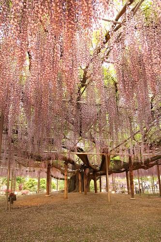 Ashikaga Flower Park 09