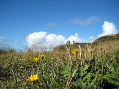 flowers_moher