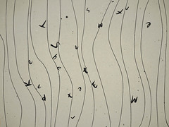 Japonisme07 (lostanastacia) Tags: vimeo graphic animation motiongraphic
