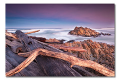 Arthur River (iii), Tasmania, Australia (Matthew Stewart | Photographer) Tags: ocean trees red sea tree water sunrise log rocks logs australia slowshutter tasmania arthurriver landscapesonline