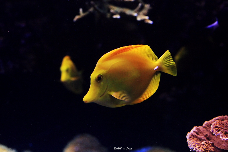Yellow Sub @ London Aquarium