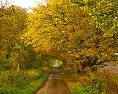 a straight road for a change  --- (algo) Tags: road autumn trees light tree photography gold countryside topf50 topv333 bravo topv1111 topv999 algo supershot magicdonkey 50f 10faves mywinners aplusphoto 200750plusfaves ysplix thegoldenmermaid thegardenofzen