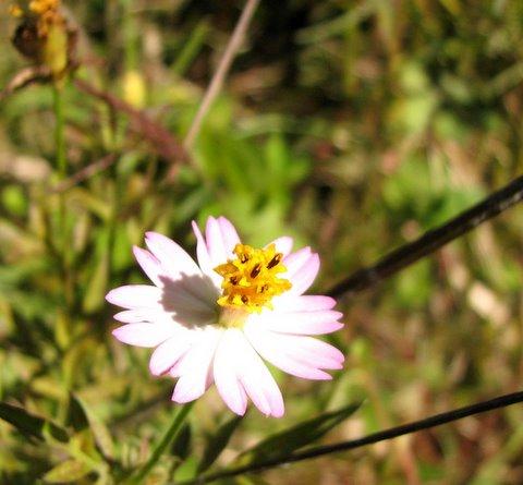 simple wildflower...