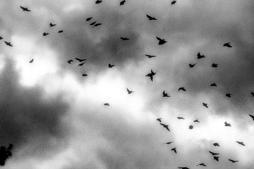 the soul's migration