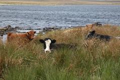 001-6626 (dolphinpix) Tags: uk greatbritain wild mountain rural landscape geotagged scotland countryside highlands europe alba unitedkingdom britain country hill scottish escocia glen highland gb land remote celt caledonian schottland celts ecosse gbr scozia scottishhighlands strath dolphinpix geo:lon=5737300 peterasprey 237kmtostrathinhighlandunitedkingdom geo:lat=57698383