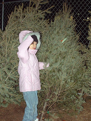 Laurel finds the perfect tree!