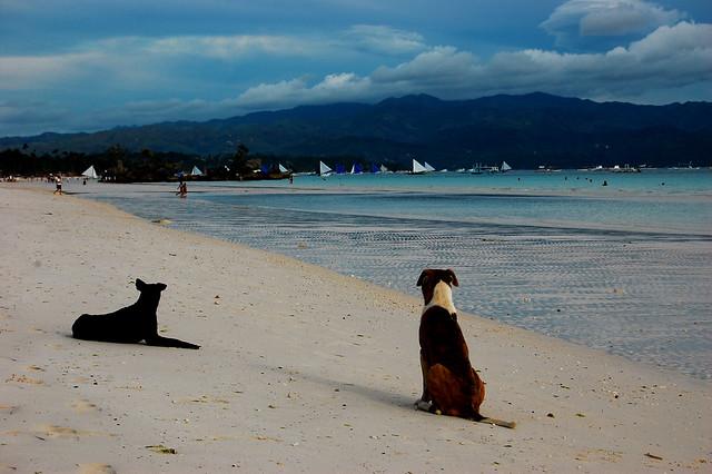 DOGS OF BORA - Part 2 (Boracay Island, Philippines)