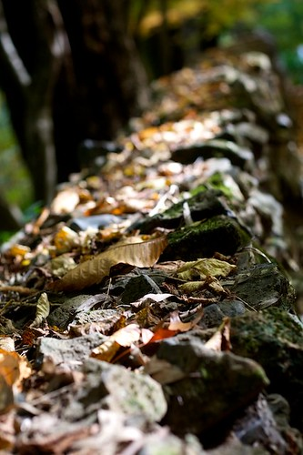 Leaves along a Wall