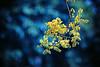 Happy Bokeh Thursday (kktp_) Tags: flowers nature thailand nikon dof bokeh bangkok themoulinrouge 70200mmf28gvr d80 infinestyle ehbd