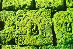 moosaik (ougenweiden) Tags: green germany island north insel ostfriesland grn anleger hafen nordsee isle friesland wangerooge norddeutschland niedersachsen inseln ostfriesische friesisch friesische