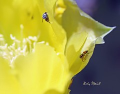 Life On The Cactus Flower (DustDevilDiver (Briley Mitchell)) Tags: texas nowhere middle