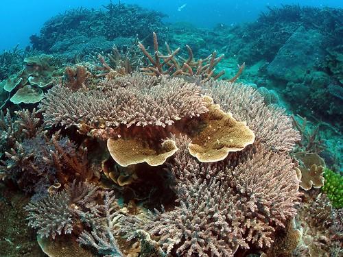 墾丁南灣眺石保護區多年保育有成,珊瑚礁健康狀態良好。