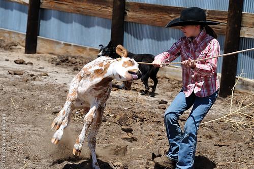 Flanking Calves