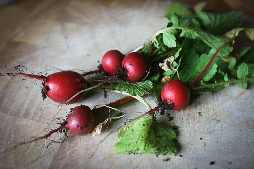 First radish harvest