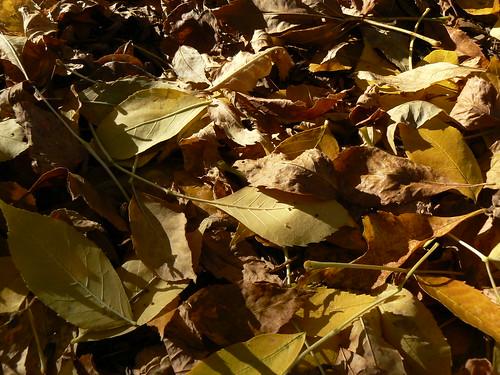 Macro of the leaves