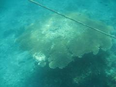IMG_2564 (dcgreer) Tags: malaysia pulau redang pulauredang