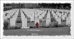 Uden, Holland War Cemetery (Debby_ab) Tags: holland cemetery remember thankyou wwi wwii thenetherlands poppies soldiers remembranceday uden canadianmilitary warcemetery canadianheroes 53canadiansoldiersburiedhere