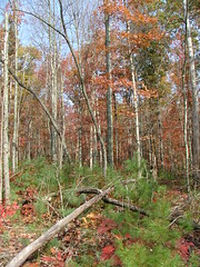 Big South Fork Forest