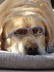 Jespah sunbathing....