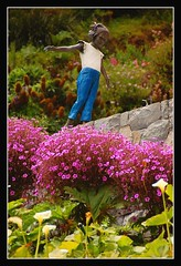 La Nia Inmvil (B'Rob) Tags: chile travel flowers blue sunset streetart art girl true garden atardecer photography valparaiso mar photo yahoo google nikon flickr paradise child via picture jardin best wikipedia eden valparaso paraiso zapallar viadelmar vregion d40 brob brobphoto