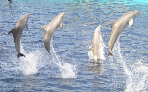 delfines de cerca
