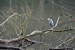 Heron in the Franco-Deutsh Gardens