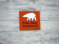 Polar Bear Jail (Brian pics) Tags: bears churchill polar mb