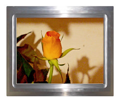 Rose pour maman-6 other frame