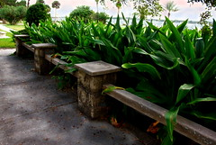 A Seat Among the Greenery (Chris C. Crowley- catching up on editing- be back ) Tags: plants garden priceless seat greenery americaamerica thecasements itsmagical onlythebestare scenicsnotjustlandscapes yourfriendlyneighborhoodpark