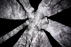 Constellations (Matt Niemi) Tags: trees pennsylvania westline alleghenynationalforest