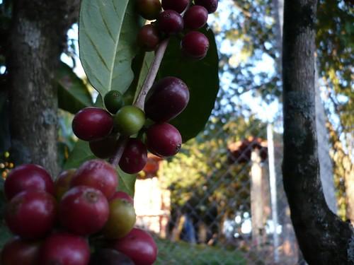 cafe naturalito..humm
