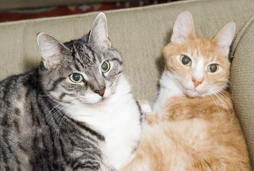 Bob (grey) and Tom (orange), 12/23/07