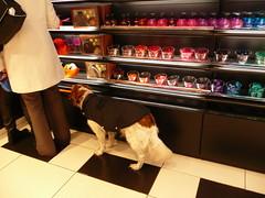 What bath perfume can I choose ? (manu/manuela) Tags: dog chien paris france cane shop shopping bath bagno perfumes sephora bains parfums profumi parfumerie dogwearingcoat