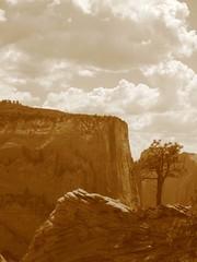 A lone tree on a ridge (ceballosrr) Tags: sepia clouds zionnationalpark lanscape lonetree monoliths climbtothetop