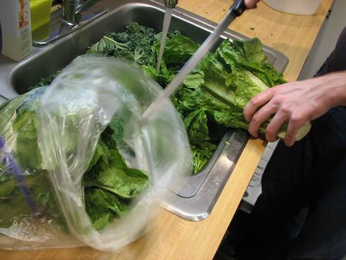adding lettuce