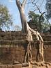 Ta Prohm - More cool overgrown tre…