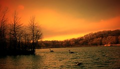 """The Sun Shines on the Other Side"" (my4otos) Tags: trees sunset lake art nature nova brooklyn interestingness prospectpark ducks swans nina colorfulsky supershot mywinners abigfave aplusphoto excellentphotographeraward onlythebestare excapture thatsbostin theperfectphotographer"