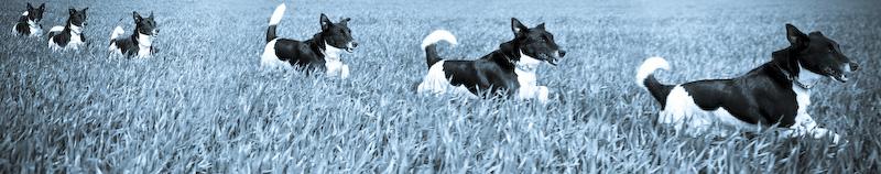 Panoramique chien qui court