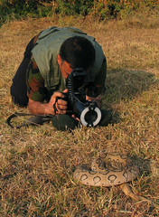 Myself - Snake Photography Session with Russell's Viper (Captain Suresh Sharma) Tags: india nature animal canon lens photography dangerous asia snake wildlife canon20d equipment camouflage creature herp chandigarh ringflash courage wildlifephotographer venomous expert coiled ferocious herpetology 30d courageous harmful macrolens macrophotography anglefinder snakebite photographyequipment photographeratwork indianwildlife outdoorphotography canonpowershotg5 russelsviper russellsviper snakeingrass coiledsnake challengingphotography snakephotography dangerousphotography snakecell snakesofindia indiansnake ambalacantt captsureshsharma expertphotographer flashformacrophotography photosessionwithsnakes techniqueofsnakephotography macrophotographykit equipmentforsnakephotography useofanglefinder techniquetophotographsnakes riskyphotography snakephotographer naturephotographerofchandigarh snakephotographerofchandigarh naturephotographerofambala wildlifephotographerofchandigarh daboiarussellii exhibitingcourage specialphotographytechniques specialcameraequipment specialcameragear specialphotographyequipment displayofdisplinedwork